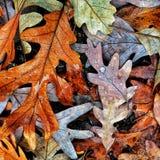 Autumn Colors Collection Royaltyfri Bild