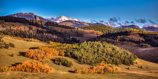 Autumn Colors in Colorado. Aspen leaves changing colors in the Rocky Mountains of Colorado. The season is Fall and the sky is blue royalty free stock images
