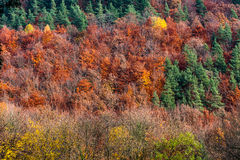 Autumn colors. Colorful autumn forest in Heidelberg, Germany Royalty Free Stock Photography