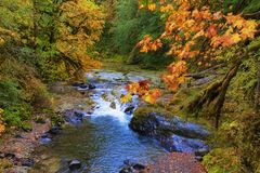 Autumn Colors on McKenzie Pass-Santiam Pass Scenic Byway. Autumn colors come to life along the South Santiam River in Oregon`s Cascade Mountain Range. A light royalty free stock photos