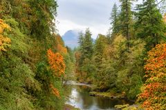 Autumn Colors on McKenzie Pass-Santiam Pass Scenic Byway. Autumn colors come to life along the South Santiam River in Oregon`s Cascade Mountain Range.  A light Royalty Free Stock Images