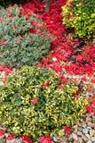 Autumn colors composition in home garden Stock Photos