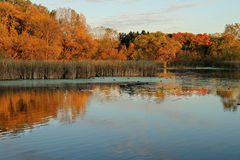 Autumn Colors and Coots on Medicine Lake in Plymouth, Minnesota Stock Photography