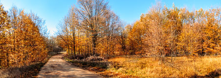 Autumn colors in country side. Panorama of country side forest in autumn Royalty Free Stock Photo