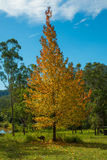 Autumn colors in the countryside Stock Photography