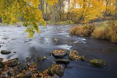 Autumn colors at the creek Royalty Free Stock Photo