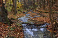 Autumn colors in a creek. Hungary Royalty Free Stock Photography