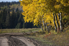 Autumn Colors Cypress Hills Canada Royaltyfri Foto