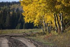 Autumn Colors Cypress Hills Canada Foto de archivo libre de regalías