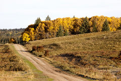 Autumn Colors Cypress Hills Canada Arkivbilder