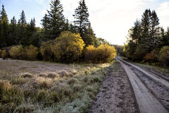 Autumn Colors Cypress Hills Canada Foto de archivo
