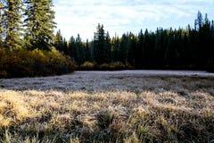 Autumn Colors Cypress Hills Canada Imágenes de archivo libres de regalías