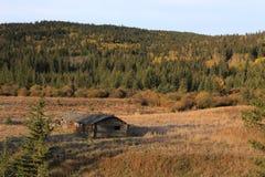 Autumn Colors Cypress Hills Canada Fotografering för Bildbyråer