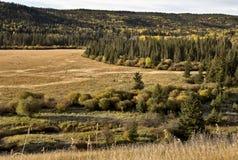 Autumn Colors Cypress Hills Canada Fotografía de archivo