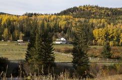 Autumn Colors Cypress Hills Canada Fotografía de archivo libre de regalías