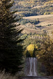 Autumn Colors Cypress Hills Canada Stock Photo