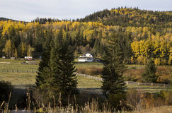 Autumn Colors Cypress Hills Canada Royalty Free Stock Photography