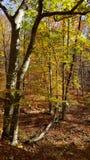 Autumn Colors dans Georgia Mountain Forest du nord Photo stock