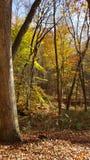 Autumn Colors dans Georgia Mountain Forest du nord Images stock