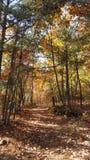 Autumn Colors dans Georgia Mountain Forest du nord Images libres de droits