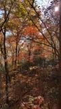 Autumn Colors dans Georgia Mountain Forest du nord Image stock