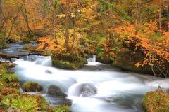 Autumn Colors de la corriente de Oirase Foto de archivo