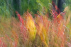 Autumn colors defocused background Royalty Free Stock Image