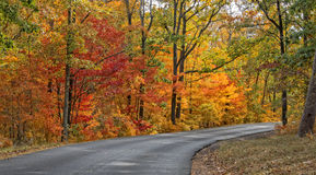 Autumn Colors Of DeSoto State Park. Autumn Road In DeSoto State Park In Alabama Royalty Free Stock Photography