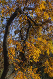 Autumn Colors - Different Shapes Royalty Free Stock Photo