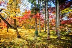 Autumn Colors in Eikando Temple, Kyoto, Kansai, Japan Stock Image