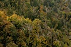 Autumn Colors Of ein Gebirgswald Stockbilder