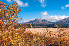 Autumn Colors in El Boliche, Bariloche, Argentina Stock Photo