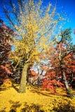 Autumn Colors en el templo de Eikando, Kyoto, Kansai, Japón Fotos de archivo