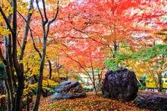 Autumn Colors en el templo de Eikando, Kyoto, Kansai, Japón Fotografía de archivo