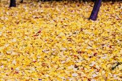 Autumn Colors en el templo de Eikando, Kyoto, Kansai, Japón Fotos de archivo libres de regalías