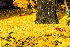 Autumn Colors en el templo de Eikando, Kyoto, Kansai, Japón Foto de archivo libre de regalías