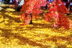 Autumn Colors en el templo de Eikando, Kyoto, Kansai, Japón Imágenes de archivo libres de regalías