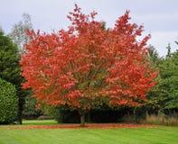 Autumn  Colors in an English Garden Royalty Free Stock Photo