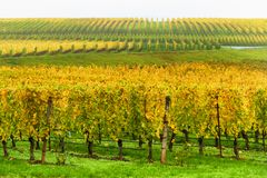 Autumn Yamhill County Wine Country landscape Royalty Free Stock Image