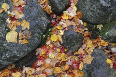 Autumn colors - fall leaves in the Adirondacks, New York. State, USA Royalty Free Stock Photography