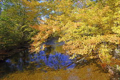 Autumn colors - fall leaves in the Adirondacks, New York Stock Photography