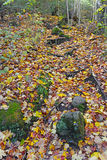 Autumn colors - fall leaves in the Adirondacks, New York. State, USA Stock Images