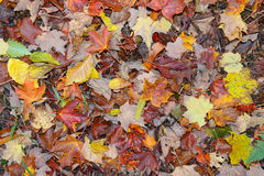 Autumn colors - fall leaves in the Adirondacks, New York Royalty Free Stock Photos