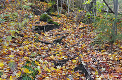 Autumn colors - fall leaves in the Adirondacks, New York Stock Image