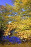 Autumn colors - fall leaves in the Adirondacks, New York Royalty Free Stock Image