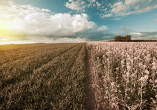 Autumn colors field landscape Royalty Free Stock Images