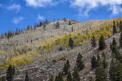 Autumn Colors and First Snow. Autumn colors on aspens with early snow on them with a partly cloudy sky in the Wasatch mountains of Utah USA Stock Photo