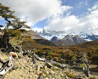 Mount Fitz Roy in the distance surrounded by the beautiful autumn colors. Hiking up to mount fitz roy passing the most spectacular autumn scenery royalty free stock image