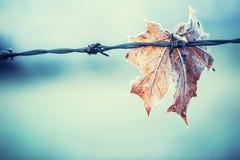 Autumn Colors Foglie di autunno nei colori e nelle luci di autunno Fogli di autunno congelati Fotografia Stock Libera da Diritti
