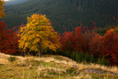 Autumn Colors Forêt de montagne Photographie stock